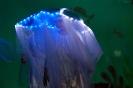 Märchenspiel 'Arielle, die kleine Meerjungfrau'_19